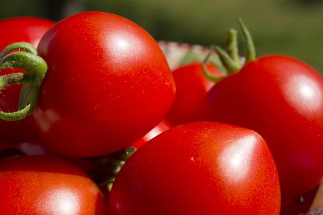 tomaten-düngen