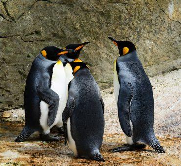 pinguin dünger