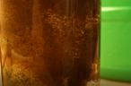 Kaffeesatz-Giesskanne Dünger Gurken